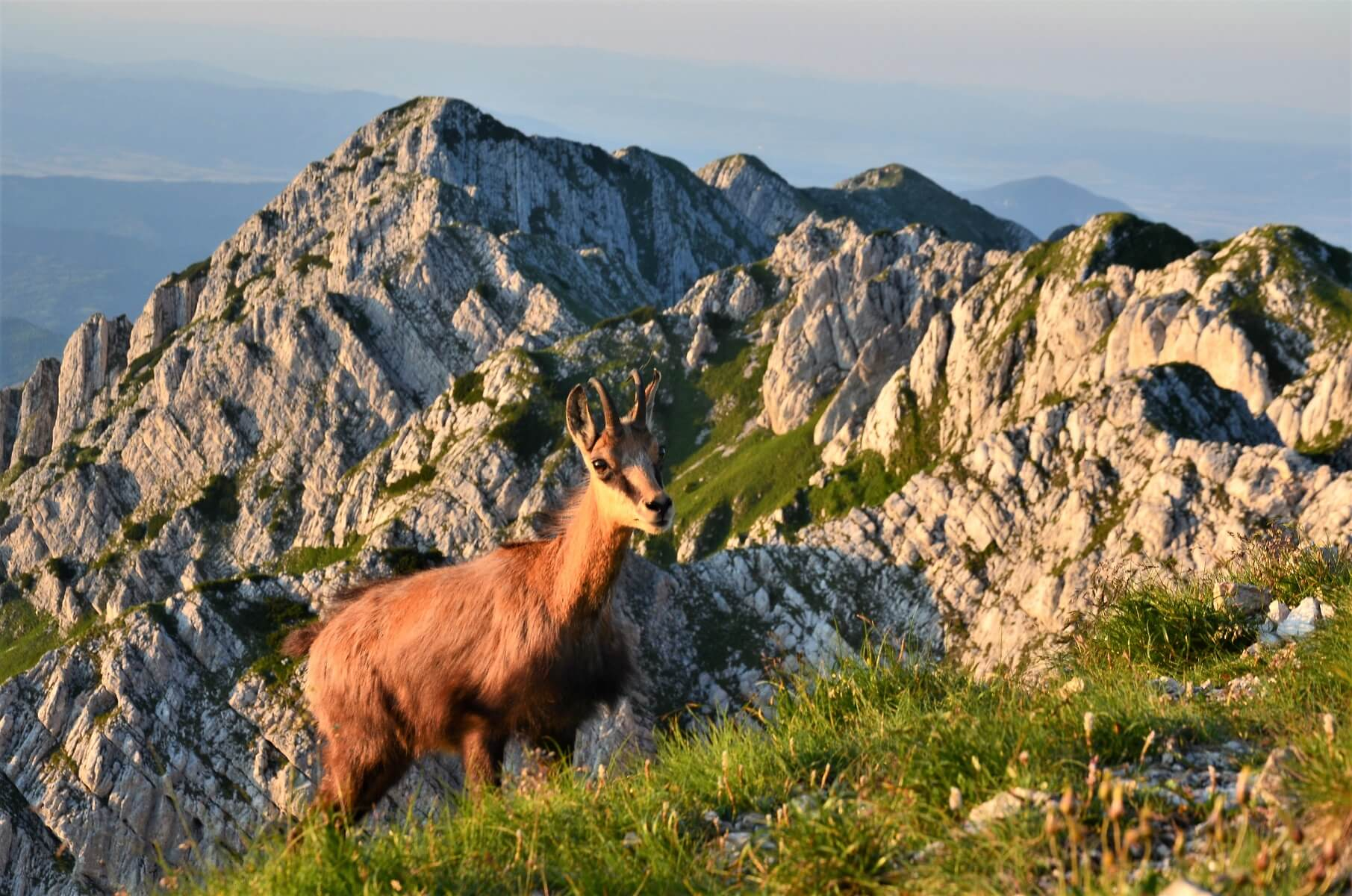 chamois tour guide romania