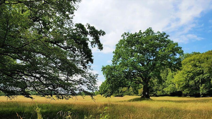 via transilvanica sighisoara breite oak
