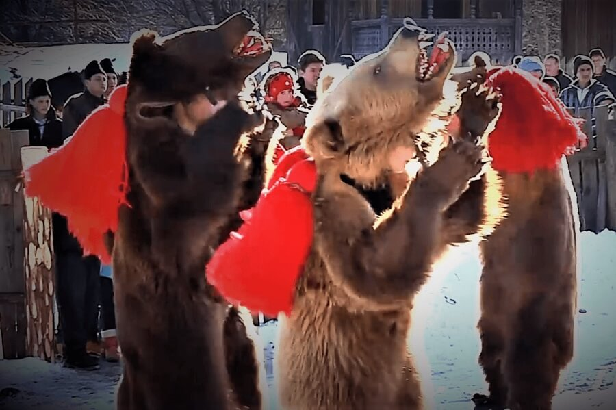 Dance Of The Bear Romania Tradition Moldova Cover (1)